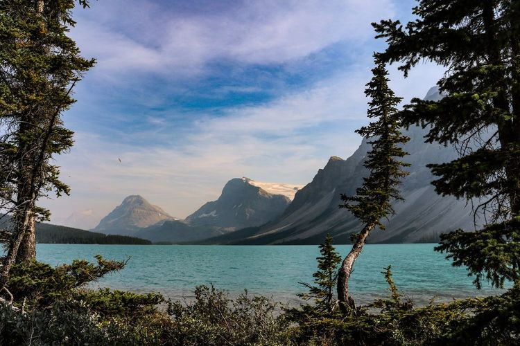 Bow Lake Banff National Park  Canada Mountain Water Tree Beauty In Nature Tranquil Scene Scenics - Nature No People Mountain Range Idyllic Turquoise Colored Nature Tranquility