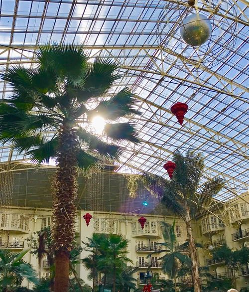 Sunflare Sunburst No People Low Angle View Tree Palm Tree Architecture Indoors  Sky Tropical Gaylord Opryland Resort Nashville Eye4photography  3XSPUnity Christmas Decoration Peaceful View Sunshine Treescape Palm Trees Palm Frond Trees And Nature Treescollection Trees And Sky