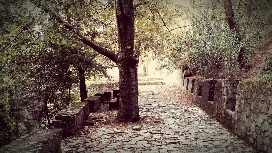 Stonework Stone Wall Nature Photography Nature Village Vintage Yellow Leaves Brown Leaves Trees Benches Stone Bench Path Stone Pathway Cyprus Kalopanayiotis Kalopanagiotis Landscape Woods Tree Trunk Tree Branches Forestwalk Forest Forest Path Forest Park