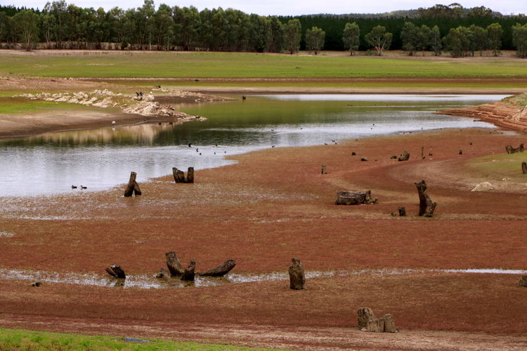 High angle view of horses in lake