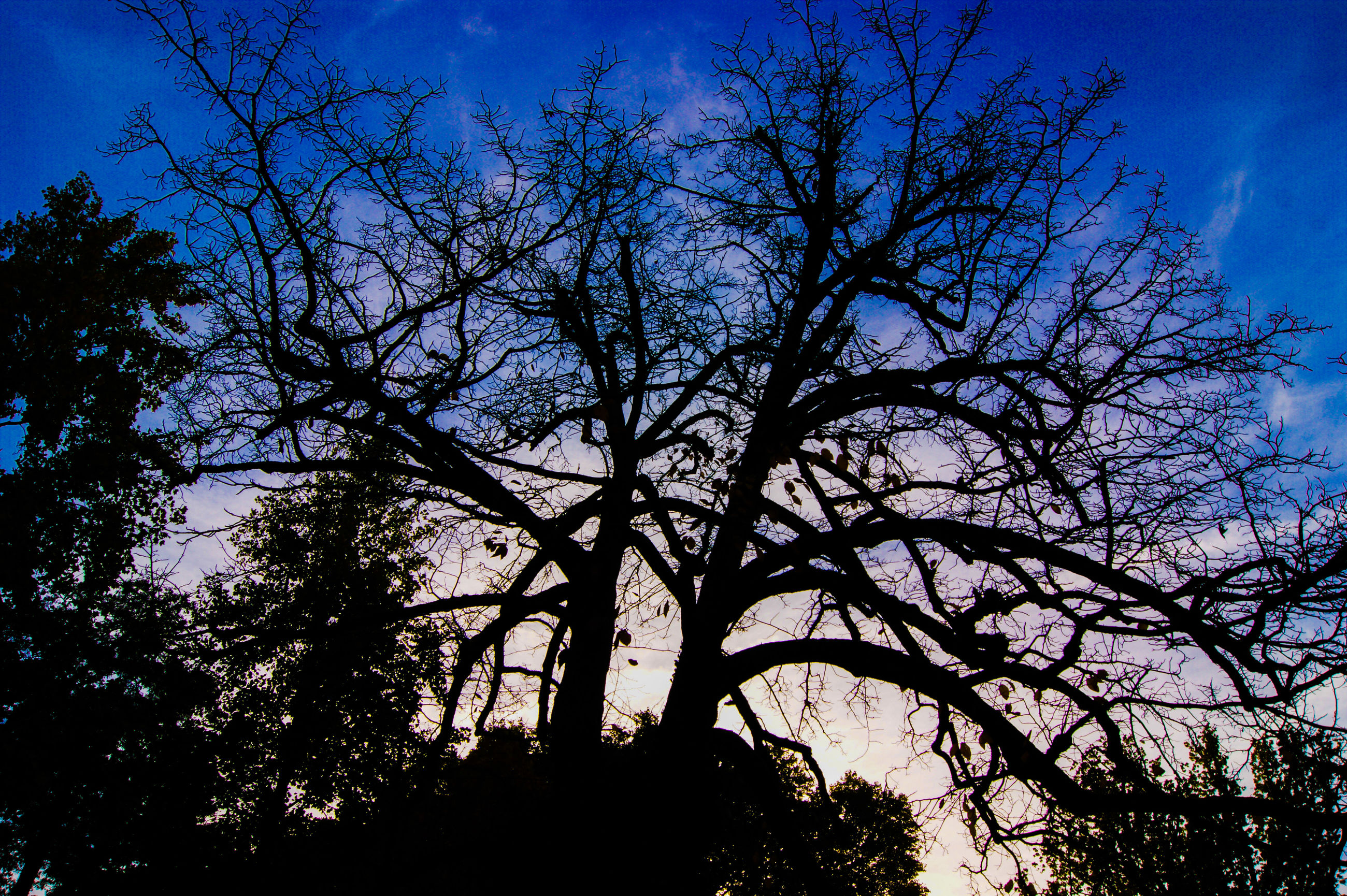 tree, low angle view, silhouette, branch, blue, sky, bare tree, tranquility, nature, growth, beauty in nature, scenics, tranquil scene, outdoors, sunlight, clear sky, no people, dusk, day, tree trunk