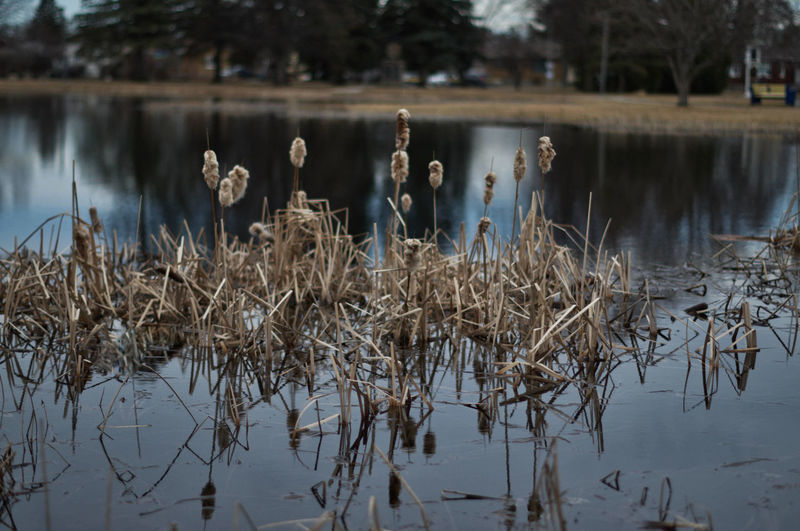Water Reflection Tranquility Plant Nature Day No People Beauty In Nature Tranquil Scene Non-urban Scene Focus On Foreground Outdoors Marshland