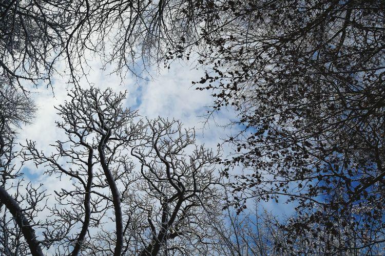 Tree Sky Bird