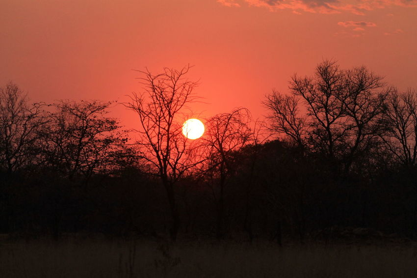 Botswana Botswana Beauty Beauty In Nature Branch Landscape Nature No People Orange Color Outdoors Scenics Sky Southern Africa Sun Sunset Tranquil Scene Tranquility Tree
