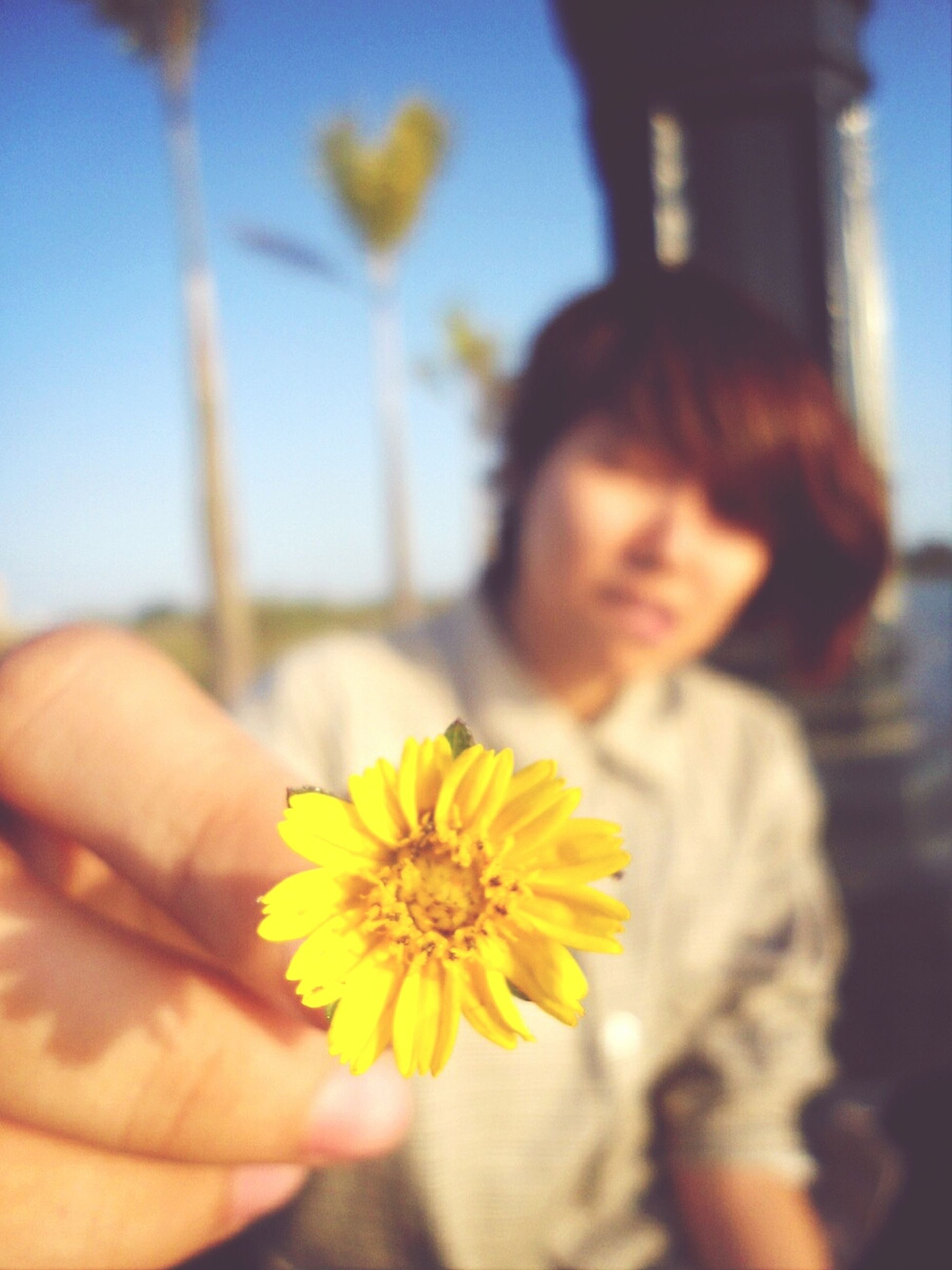 flower, focus on foreground, holding, lifestyles, leisure activity, fragility, yellow, person, headshot, petal, freshness, flower head, casual clothing, close-up, waist up, childhood, elementary age