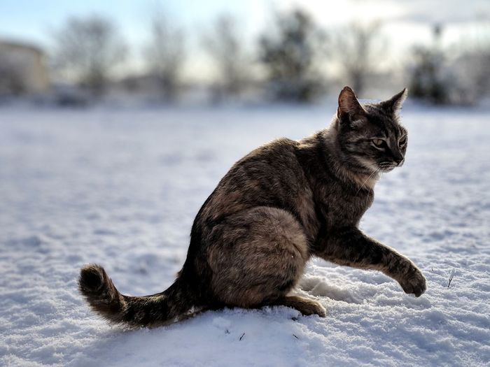 Cat sitting in a snow