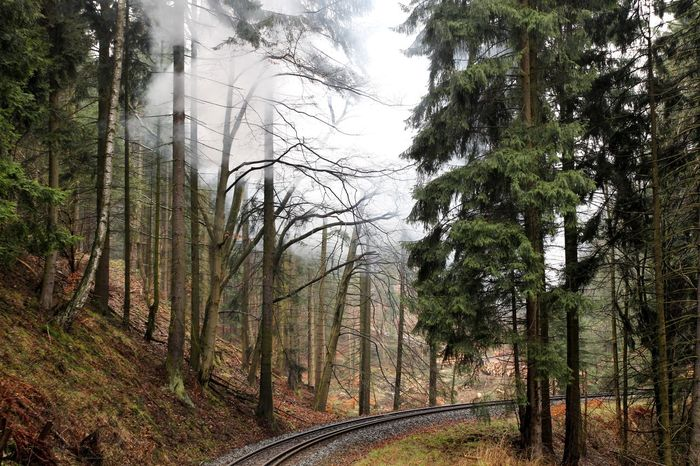 Beauty In Nature Brocken Brockenbahn Colorful Day Forest Harz Look Back Narrow-gauge Railway Nature No People Outdoors Rails Scenics Sky Steam Steam Train The Way Forward Tracks Tranquility Tree Trees Uphill