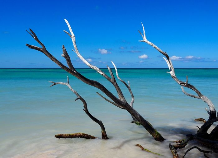 Water Sea Sky Beauty In Nature Tranquility Nature Scenics - Nature Land Blue Beach No People Tranquil Scene Horizon Horizon Over Water Day Dead Plant Plant Tree Bare Tree Outdoors Driftwood Tropical Climate Carribean Backgrounds