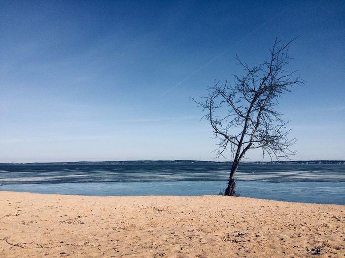 Минское море Sea Tree Outdoors No People