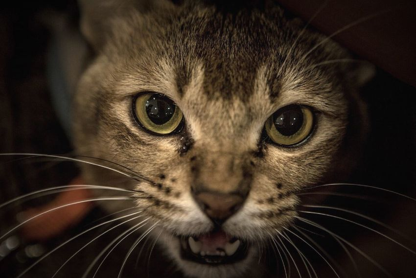Cat Lovers One Animal Pets Domestic Cat Close-up Cat Animal Eye Cat Eyes Cute Selective Focus Cats