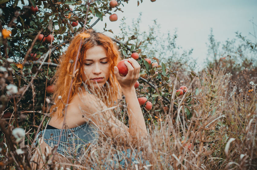 Girl in apple garden Apple Apple Tree Beautiful Woman Beauty Fashion Field Front View Hair Hairstyle Land Leisure Activity Lifestyles Long Hair Nature One Person Outdoors Plant Redhead Women Young Adult Young Women