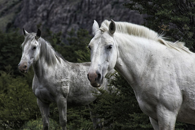 Beauty In Nature Animal Themes Animal Horse Mammal Domestic Animals Livestock Domestic Animal Wildlife Pets Two Animals Group Of Animals Working Animal Land No People Vertebrate Day Field Plant Standing Nature Outdoors Herbivorous Animal Head  Ranch