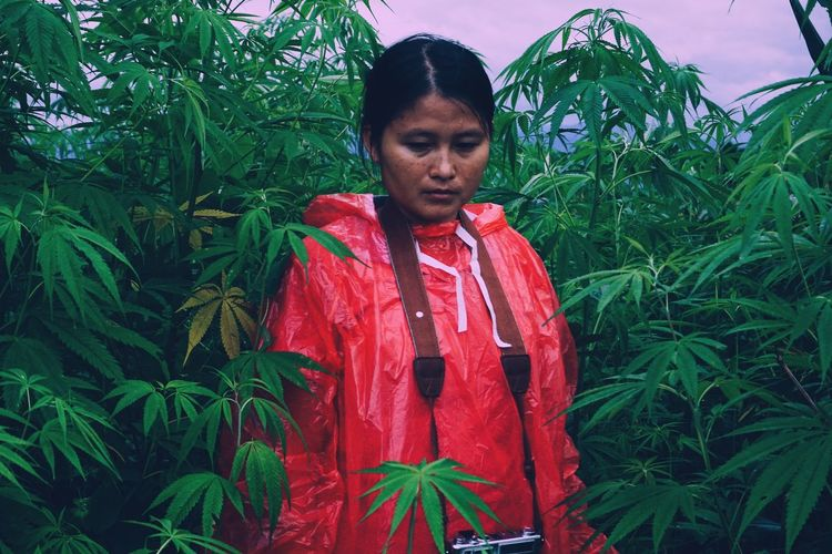 Woman wearing raincoat while standing amidst cannabis plants on land