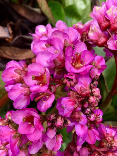 Flower Petal Pink Color Beauty In Nature Nature Fragility Flower Head No People Freshness Close-up Plant Day Outdoors Growth Springtime Blooming Freshness Plant Growth Beauty In Nature Nature EyeEmNewHere