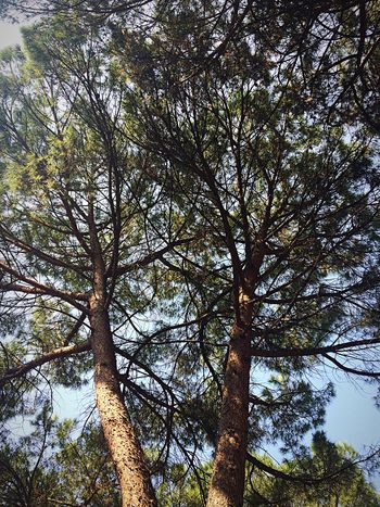 Tree Low Angle View Growth Nature Branch Outdoors Day Tree Trunk Beauty In Nature No People Forest Sky
