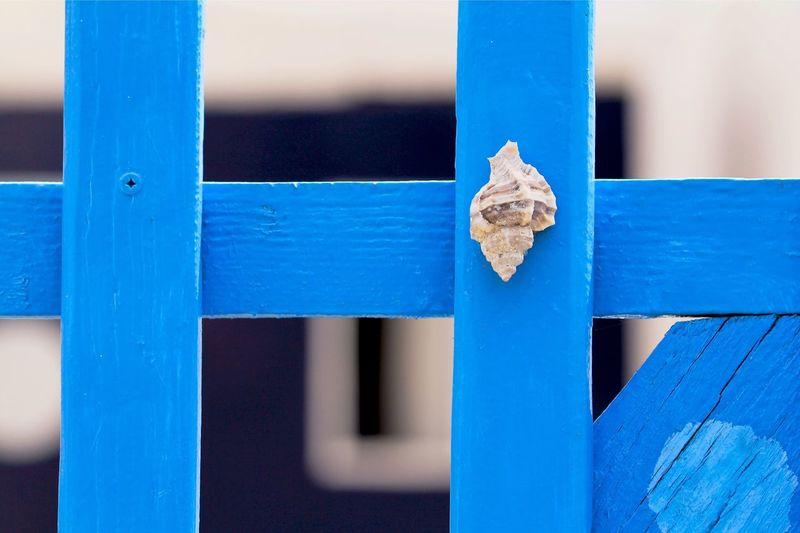 Seashell Stuck On Blue Gate
