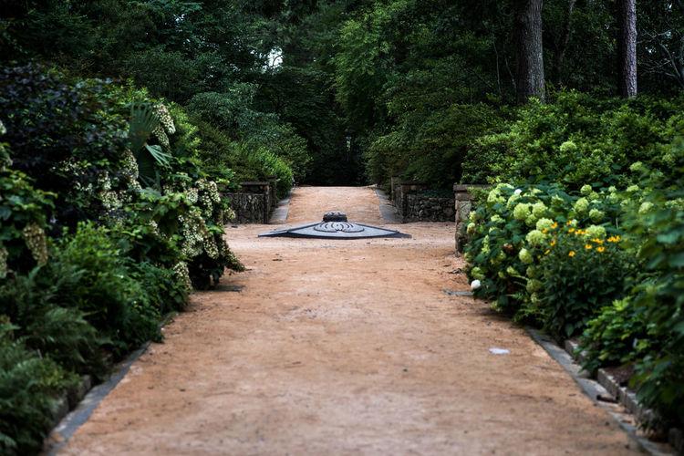 Footpath Amidst Plants In Garden