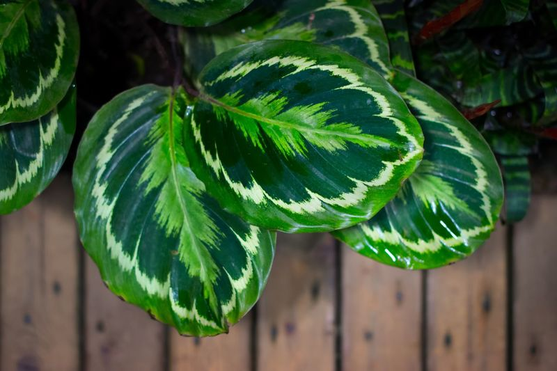Green Color Leaf Growth Plant Part Plant Close-up Focus On Foreground Beauty In Nature No People Nature Day Food And Drink Freshness Healthy Eating Wellbeing Outdoors Food Sunlight Natural Pattern Botany
