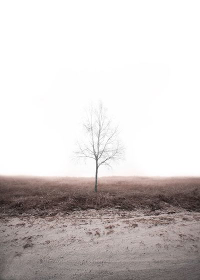 Minimalism Sky Tree Land Clear Sky Landscape Tranquil Scene Environment Tranquility Beauty In Nature Scenics - Nature Bare Tree Nature Isolated Outdoors