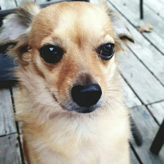 Rescuedog Dogslife Dogstagram Doglover