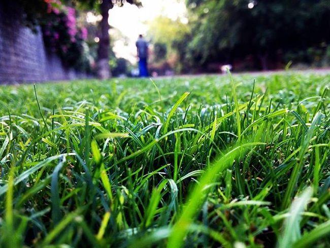 Morning DelhiDairy Delhi DelhiDairies India Grass Mobilephotography Infocus Park Walk Maximum Closeness