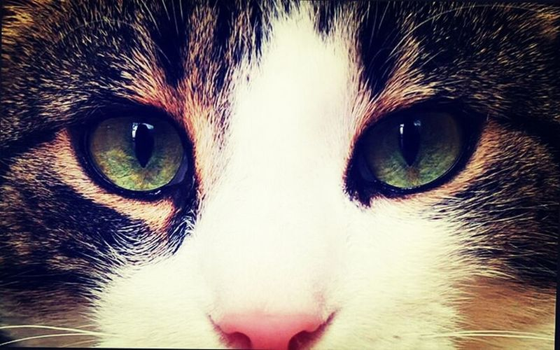 My Cat Beautiful Eyes Photography Colorful