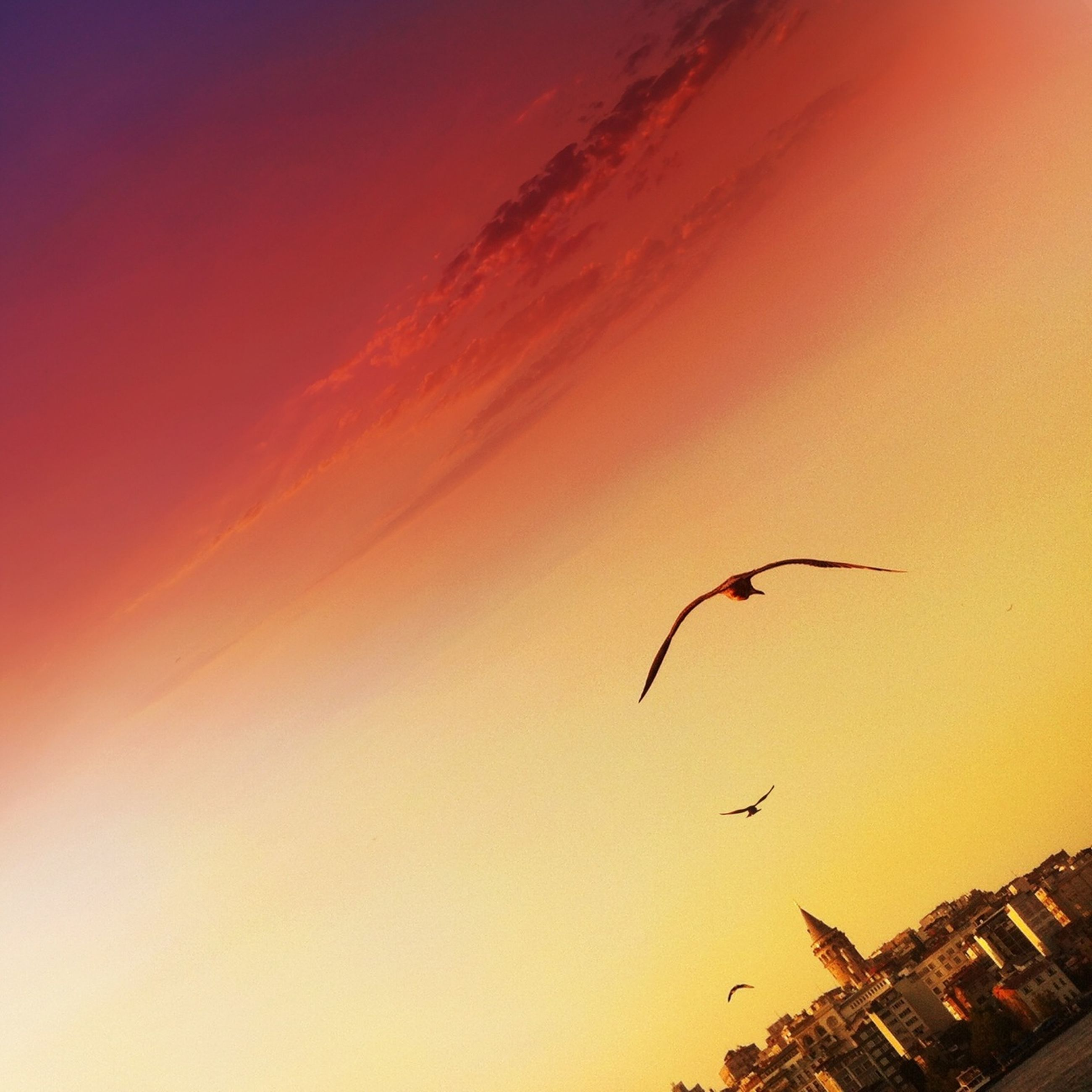 sunset, architecture, orange color, built structure, building exterior, flying, bird, low angle view, sky, silhouette, animals in the wild, animal themes, dusk, mid-air, copy space, outdoors, nature, no people, one animal, wildlife