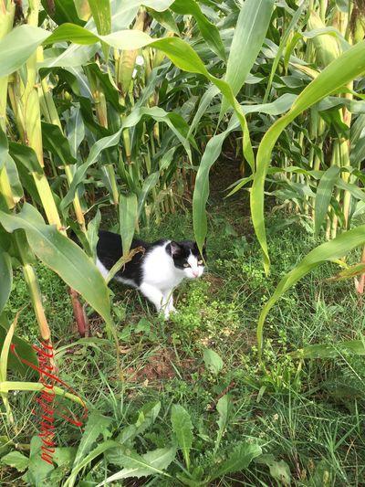 Bauernhofpussie lässt sich mit Leckerli locken. 💕💗 Monique52 Pussycat Katzen 💜 Katzenliebe Pussie Locken