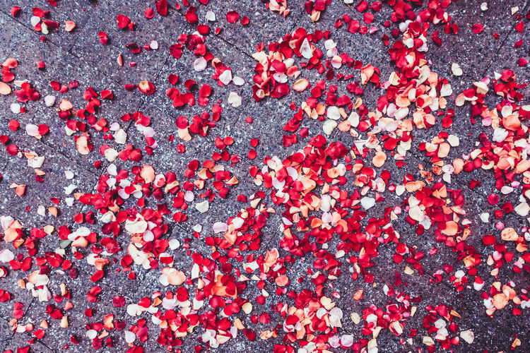Celebration Abundance Autumn Backgrounds Beauty In Nature Close-up Day Flower Flower Head Fragility Freshness Full Frame High Angle View Leaf Leaves Nature No People Outdoors Petal Red Rose - Flower Rose Leaves Rose Petals Wedding Ceremony Wedding Day
