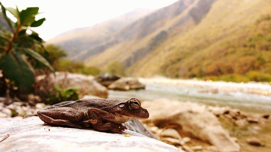 Cañon puerta la boca Montemorelos Nl.Mx Rana Anfibio Paisaje Rio Montemorelos Nuevo Leon Roca Sierra Fauna