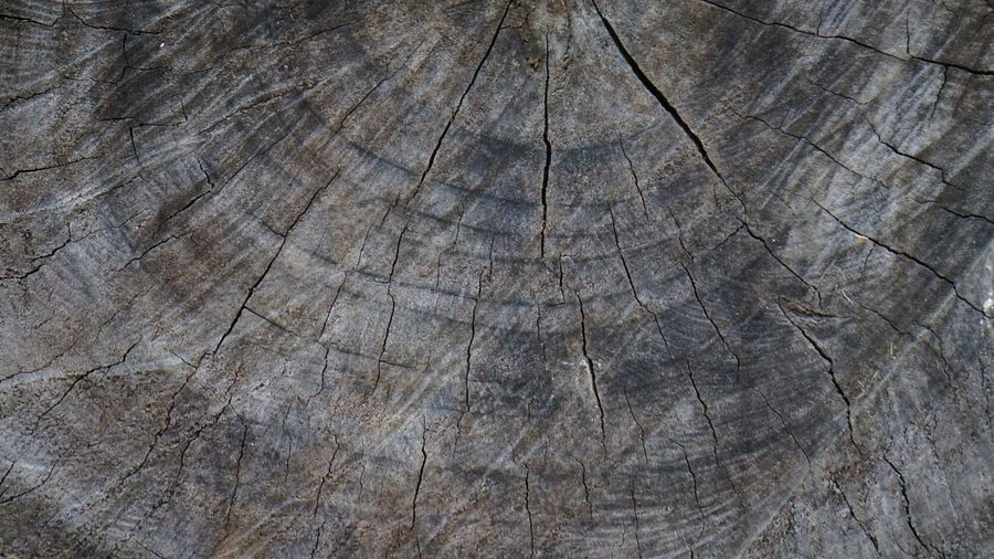 Old wood with sawing pattern Theme Timberland Timber Wooden WoodLand Wood - Material Wood Design Pattern, Texture, Shape And Form Pattern Textured  Backgrounds Full Frame Brown Pattern Close-up Nature Rough Wood - Material No People Outdoors Tree Day