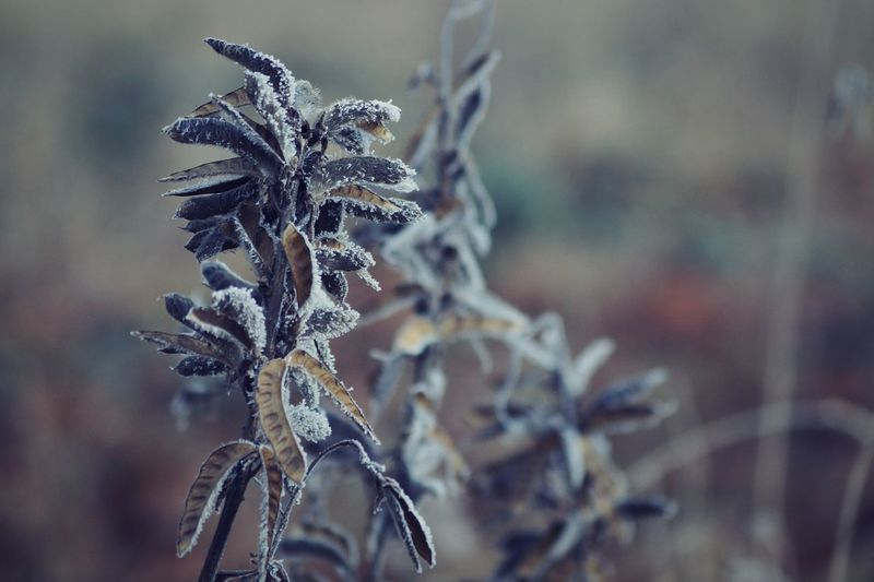 Showcase January 2017 2017 Januari Niklas Sweden Björkvik Winter Close-up Nature Cold Temperature Branch Beauty In Nature Plant Frozen Outdoors Wilted Plant BYOPaper! The Week On EyeEm Perspectives On Nature Shades Of Winter