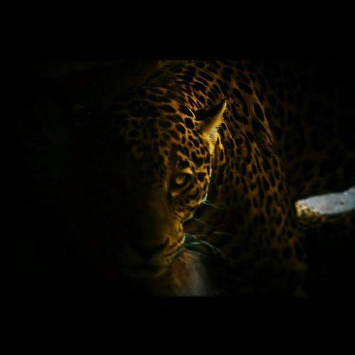 How I look when I prowl... Naturelovers WORKHARD Mig Lightroom5