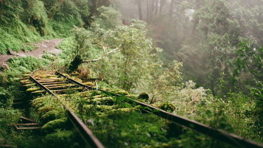 Tree Plant Nature Rail Transportation Forest Railroad Track No People Track Day Land Growth Green Color Tranquility Transportation Outdoors Selective Focus Scenics - Nature Beauty In Nature Tranquil Scene Non-urban Scene