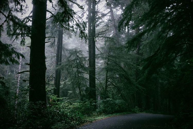 Road Amidst Trees In Forest During Mist
