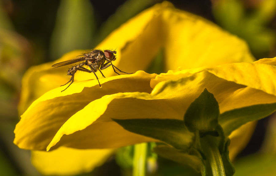 Just Landed Beauty In Nature Bee Close-up Flower Flower Head Fly Insect Nature No People One Animal Outdoors Petal Plant Yellow