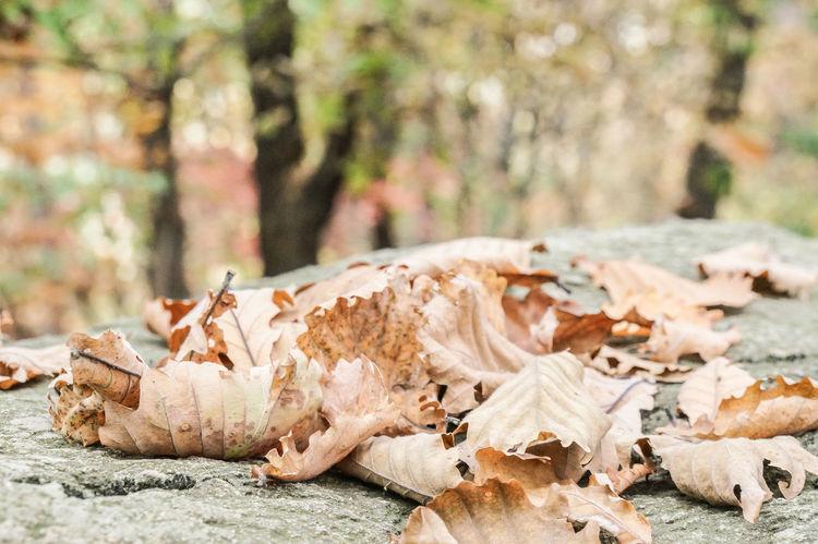 Autumn Colors Chunggyesan Mountain Fallen Leaves