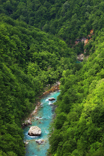 Canon Beauty In Nature Creek Day Deep Forest Green Green Color Landscape Landscape_Collection Landscape_photography Montenegro Montenegro Wild Beauty Nature No People Outdoors River Scenics Tara Tara Canyon Travel Travel Destinations Travel Photography Tree Water Wood