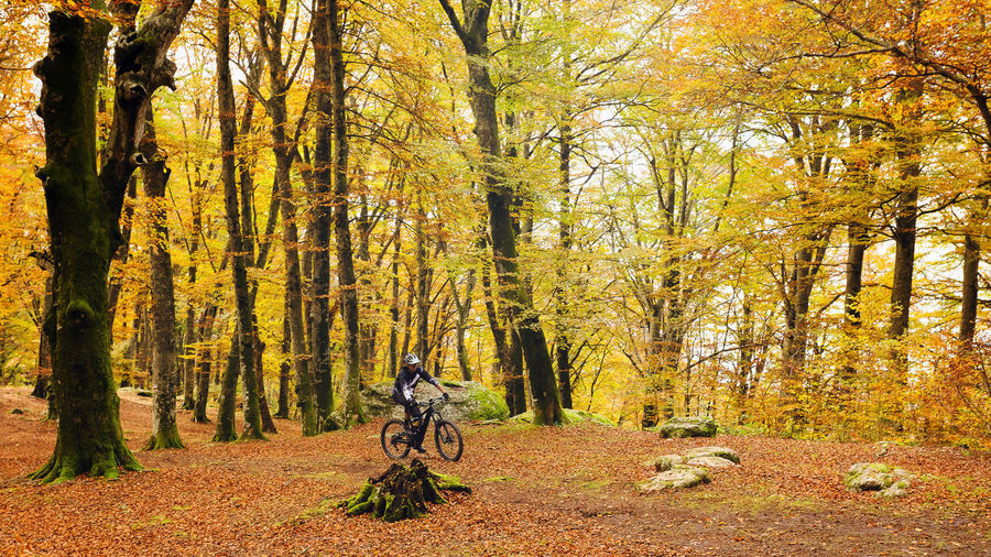 A boy on a mountain bike goes through a trail in the beech forest. In the background the trees and the fallen leaves with the warm colors of autumn. Tree Autumn Plant Land Forest Bicycle Leisure Activity One Person Real People Nature Change Beauty In Nature Day Growth Full Length Lifestyles Plant Part Tree Trunk Transportation Leaf Riding Outdoors WoodLand Foliage Enviroment