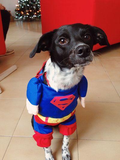 Superdog - VSCO Vscocam Superman Superdog IPhoneography