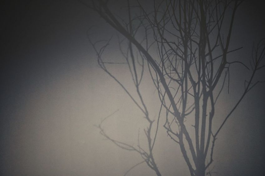 | Dream | EyeEm Italy Light And Shadow Grey Color Tree Bare Tree Branch Dead Plant Plant Part Close-up Foggy Capture Tomorrow