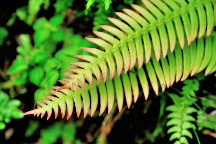 Flora in the ferns, growing dense. Green Growth Natural Natural Beauty Nature Beauty In Nature Close-up Day Expand Fern Ferns Focus On Foreground Fragility Freshness Frond Green Color Growth Leaf Nature No People Outdoors Plant Plant Kingdom Spiral