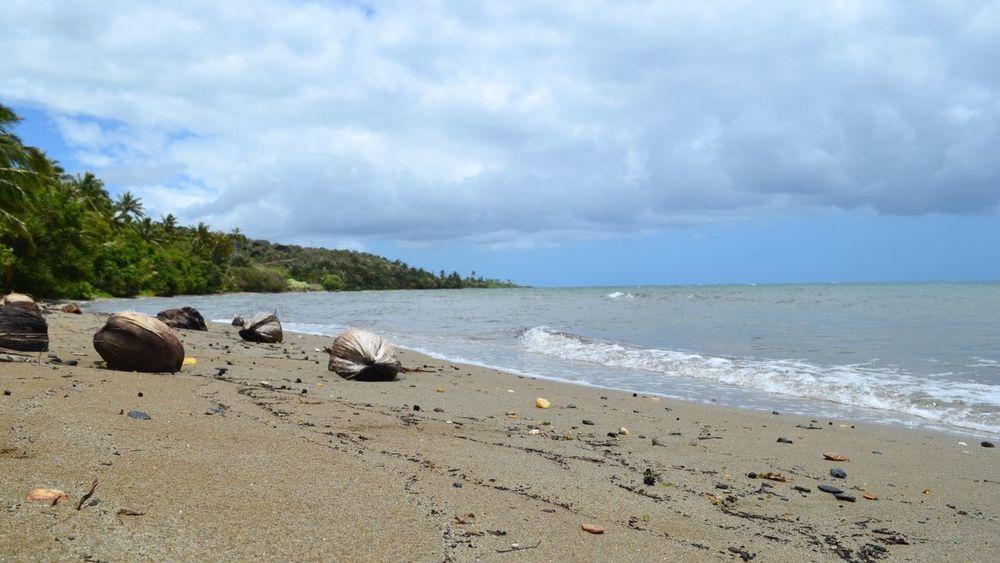 Beachphotography Beach Coconuts Sand & Sea Newcaledonia New Caledonia Pouebo