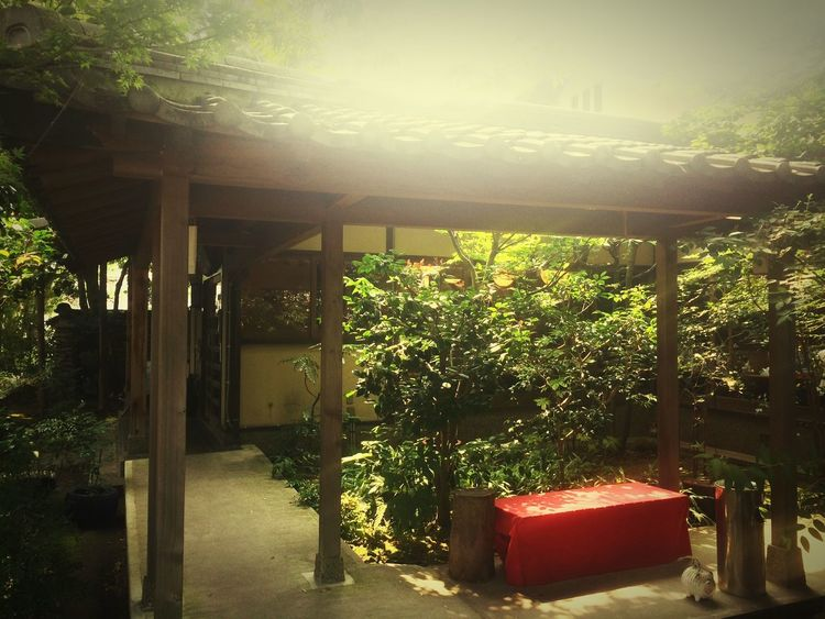 This is Japanese teahouse. We can eat delicious Japanese sweets. There is a good old Japanese atmosphere. Growth Tree Plant Day No People Front Or Back Yard Sunlight Outdoors Architecture Built Structure Nature Beauty In Nature Jpan 日本 茶屋 Cafe カフェ スイーツ Sweets お菓子 Tea Tea Time