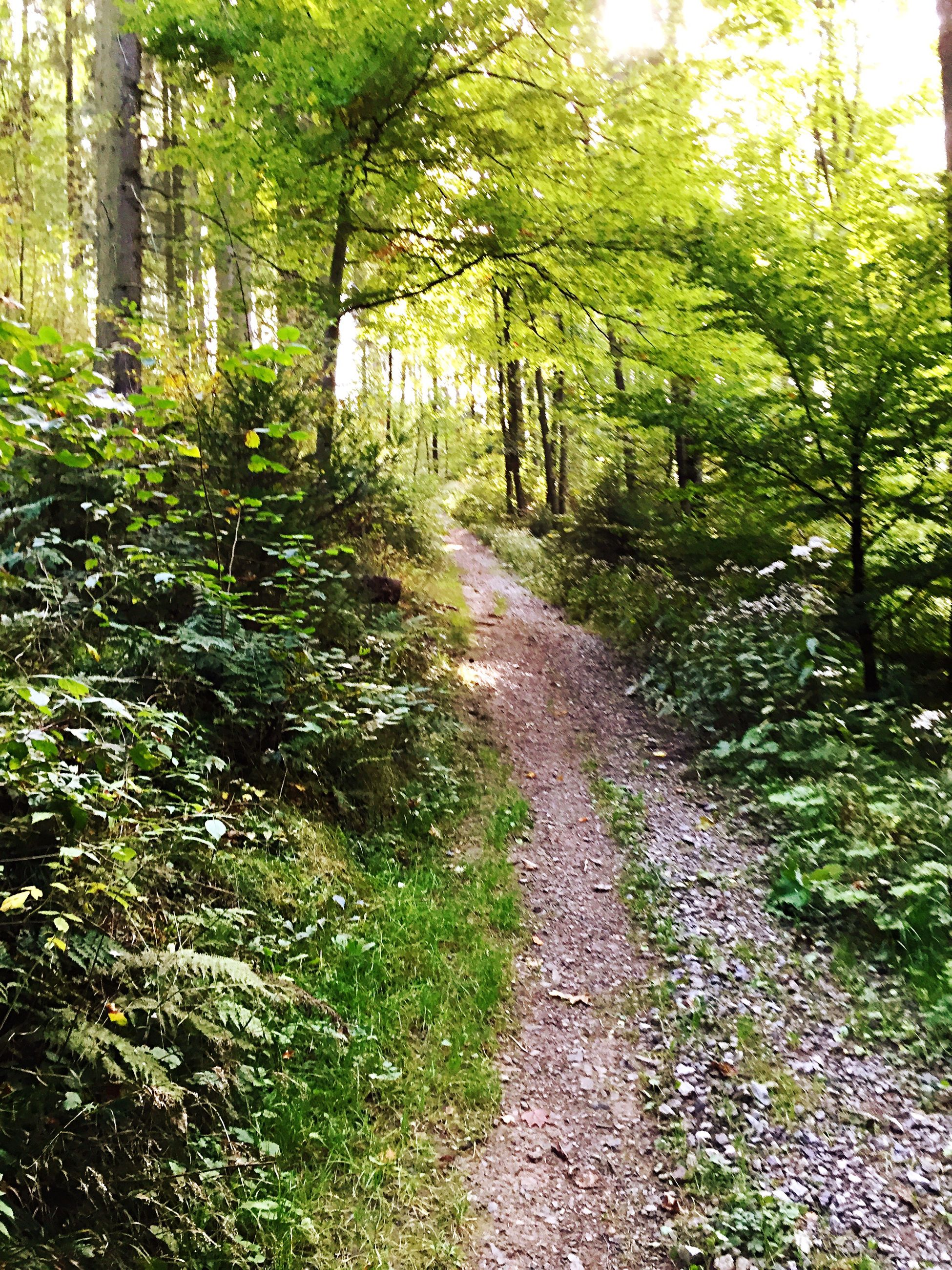 the way forward, tree, growth, forest, diminishing perspective, footpath, tranquility, nature, green color, vanishing point, tranquil scene, pathway, plant, dirt road, narrow, tree trunk, transportation, beauty in nature, walkway, day