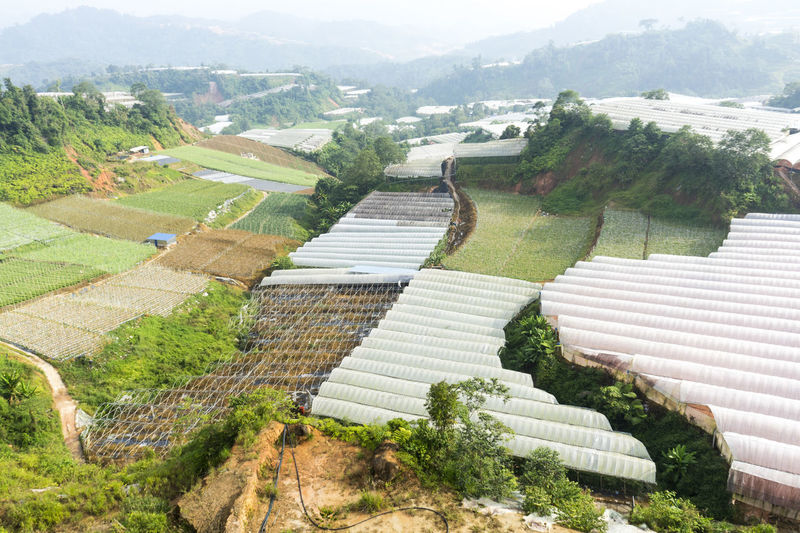 Green house at hill side at Cameron Highland Malaysia Botanical Gardens Climate Change Cold Cultivate Deforestration Ecology Farm Farming Flood Flowers Green Green House Grow Harvest Hill Side Hot House Plants House Plant Lettuce Organic Plant Plantation Production Salad Soil Erosion Vegetables