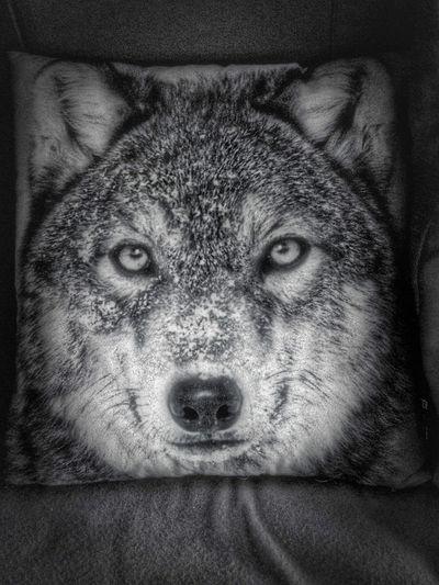 Alertness Animal Head  Animal Themes Blackandwhite Callofthewild Comfortable Decoration Pillow Relaxation Wolf