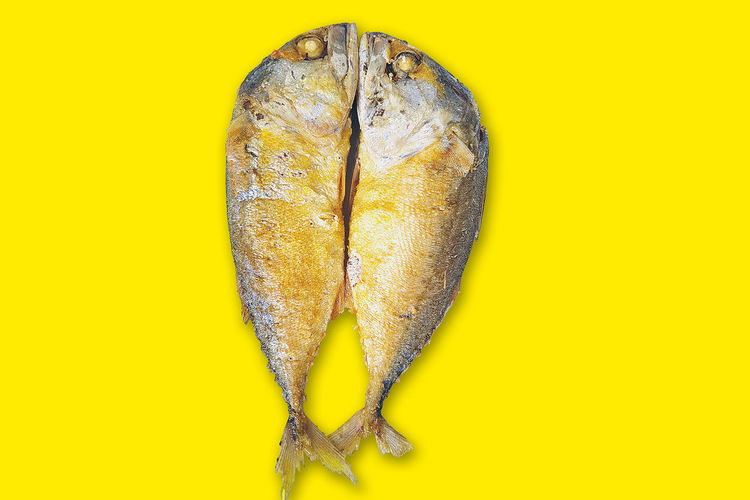 Two mackerel have a yellow background. Diet Dinner Animal Background Close-up Eat Fish Food Food And Drink Freshness Fried Fried Fish Healthy Eating Kitchen Mackerele Organic Protein Ready-to-eat Restaurant Sea Studio Shot Two Two Animals Yellow Yellow Background