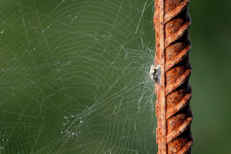 Spider Spider Web Close-up Outdoors Animal Wildlife Animals In The Wild Animal Themes Fragility Beauty In Nature No People