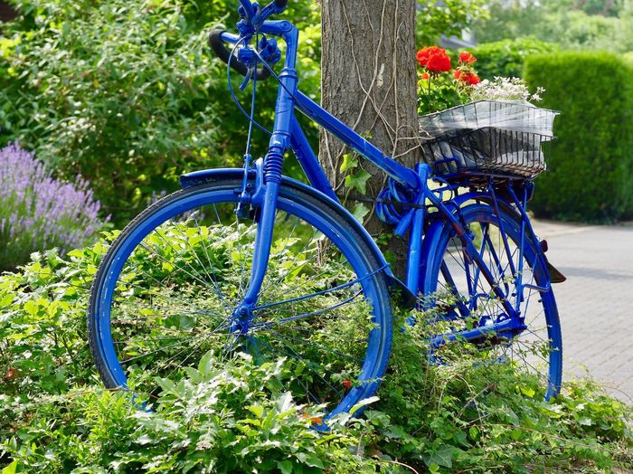 Bepflanztes Fahrrad in Meerbusch... EyeEm Nature Lover Bicycle Basket With Flowers Blue Color Flowers Meerbusch🌳 Bike Decoration Bicycle Plant Transportation No People Land Vehicle Nature Flower Flowering Plant Green Color Blue Wheel Basket The Still Life Photographer - 2018 EyeEm Awards The Street Photographer - 2018 EyeEm Awards
